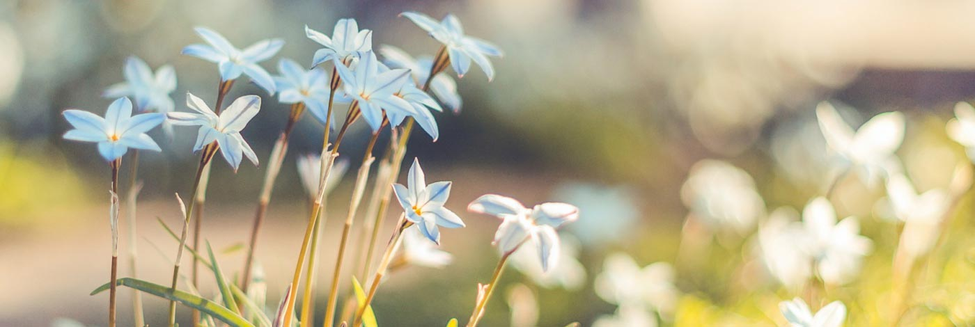 Nu uita sa ne suni cand ai nevoie de flori!